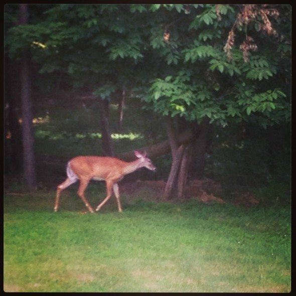 deer siting #LetsGoPlaces