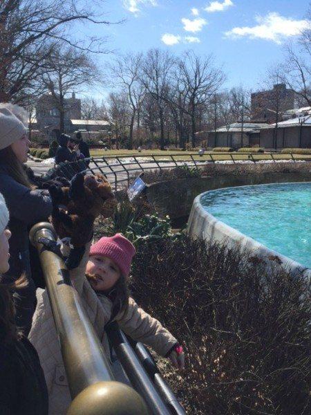 Seals #NYiswild Bronx zoo