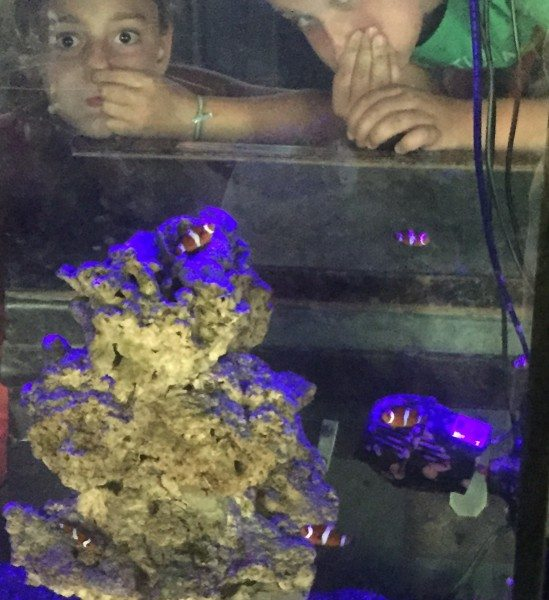 Jenkinsons Aquarium fish