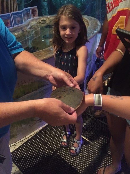 Jenkinsons Aquarium touchtank horseshoe crab