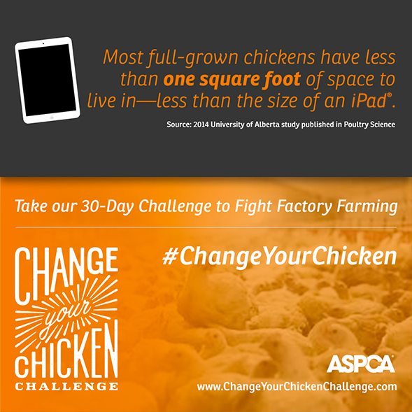 change-your-chicken