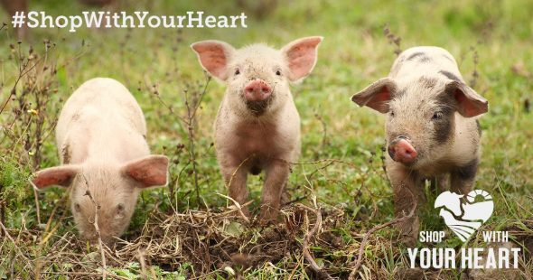 Shop with your heart pigs